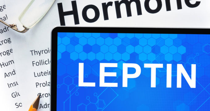 A Brief Overview of Leptin