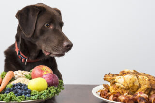 6 Safe Human Food for Dogs to Enjoy