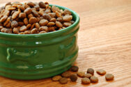 5 Safe Human Food for Cats to Enjoy
