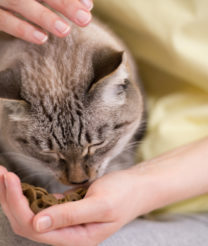 Dry Foods For Cats To Improve Their Health