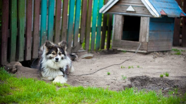 The Best Pet Insurance Plans for Pre-Existing Conditions ...