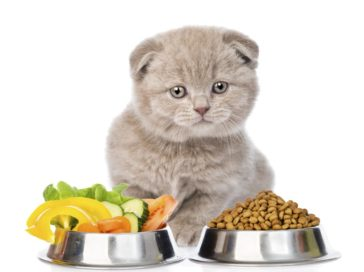 Benefits and risks of raw pet food