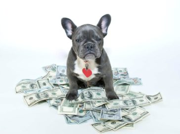 Eight pet expenses that should not be ignored