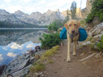 Essential tips to consider before camping with pets