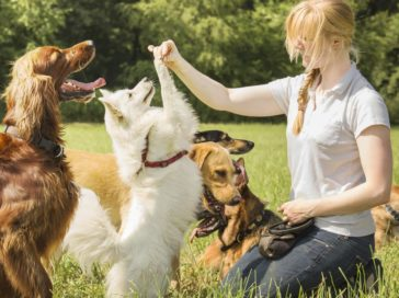 Essential tips to start a dog boarding business