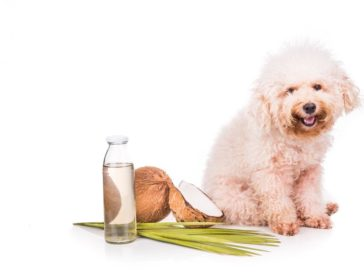 Five effective home remedies to prevent the spread of fleas on pets