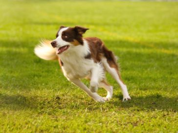 How to get your dog started on dog agility training