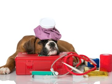 Must have items in a pet's emergency kit