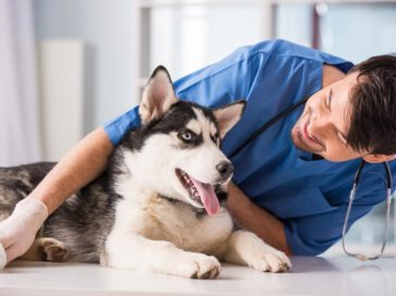 Top three benefits of boarding your pet at a veterinary clinic