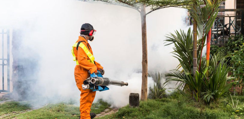 Guidelines for Backyard Mosquito Control » Healthorigins