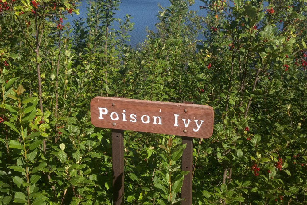 Symptoms and Ways to Treat Poison Ivy Rashes