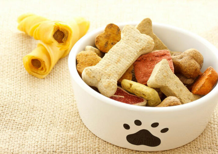 6 things to know about dog food allergies