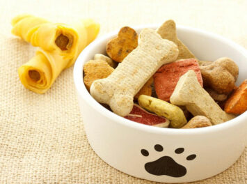Aspects to consider while selecting the best dog food