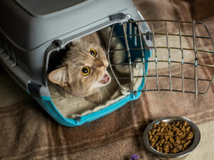Tips to treat cats without spoiling them