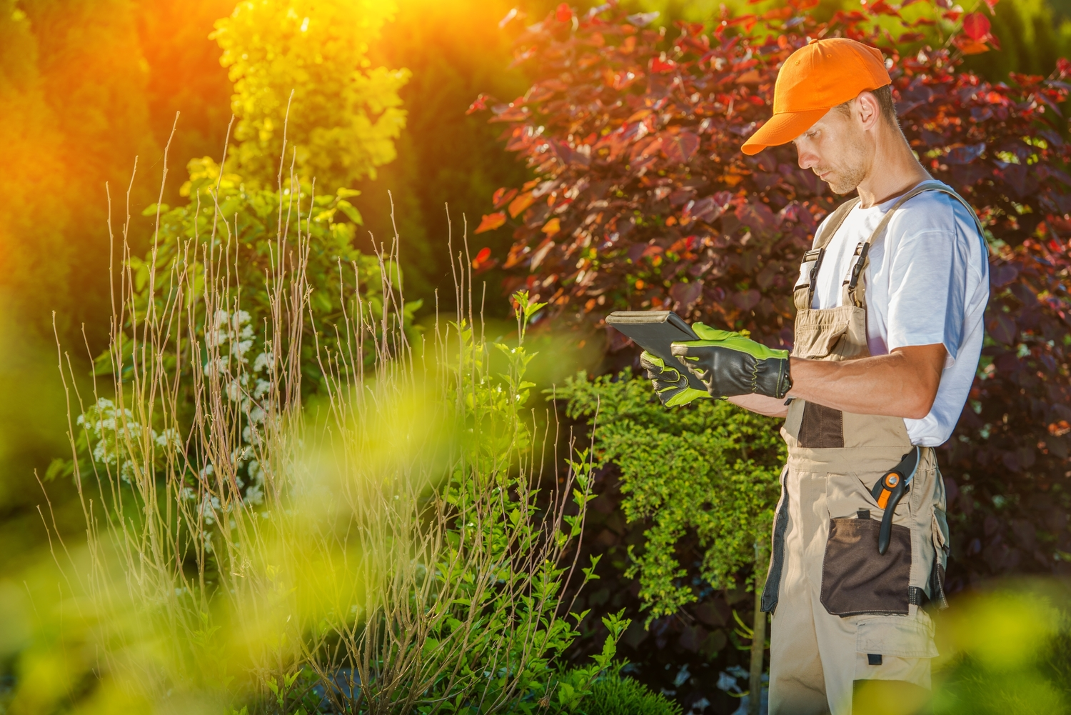 A Guide To Affordable Lawn Care Services