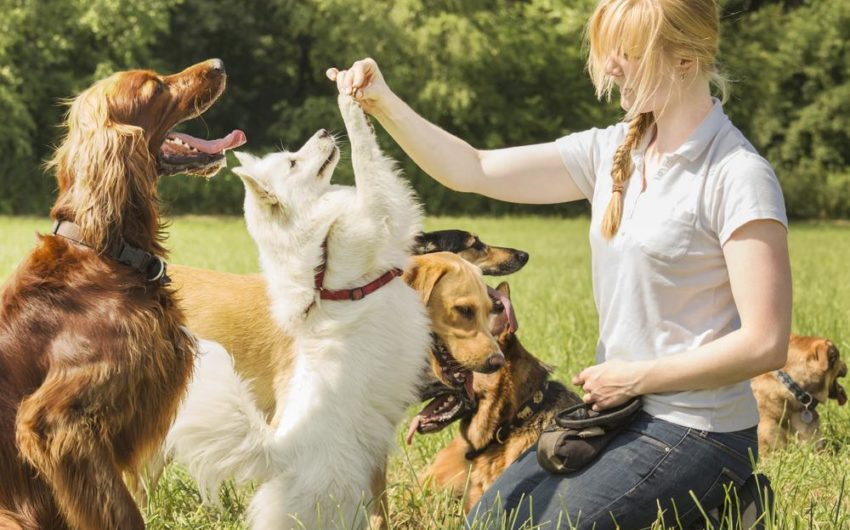 The Benefits of Adopting or Rescuing a Pet