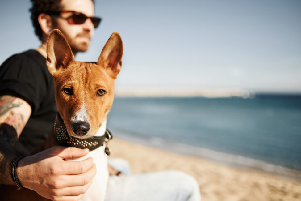 A Basic Checklist to Follow When Traveling with Pets