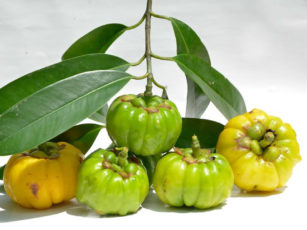 Getting an insight on Garcinia Cambogia