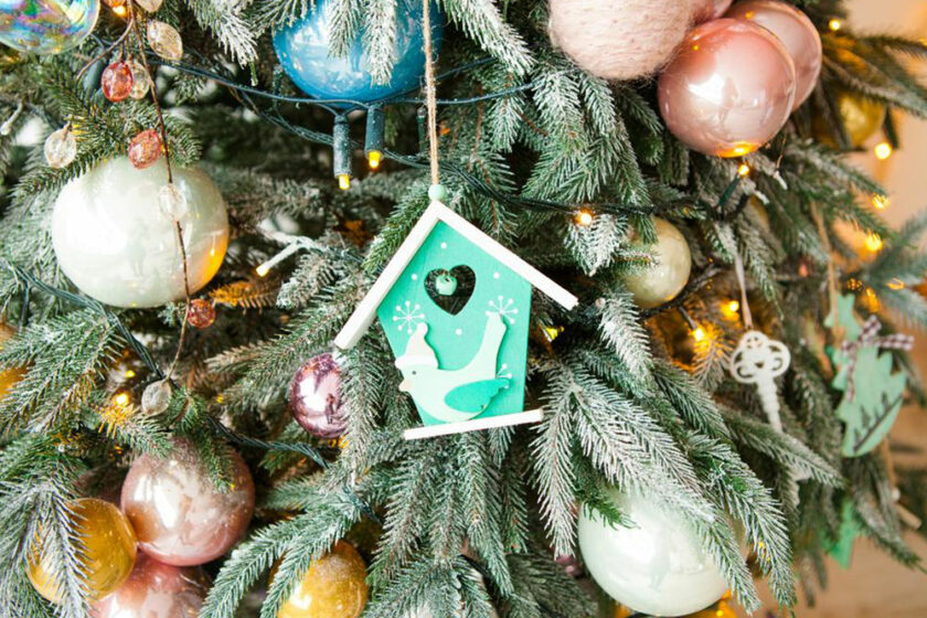 5 tips to follow while buying a Christmas tree