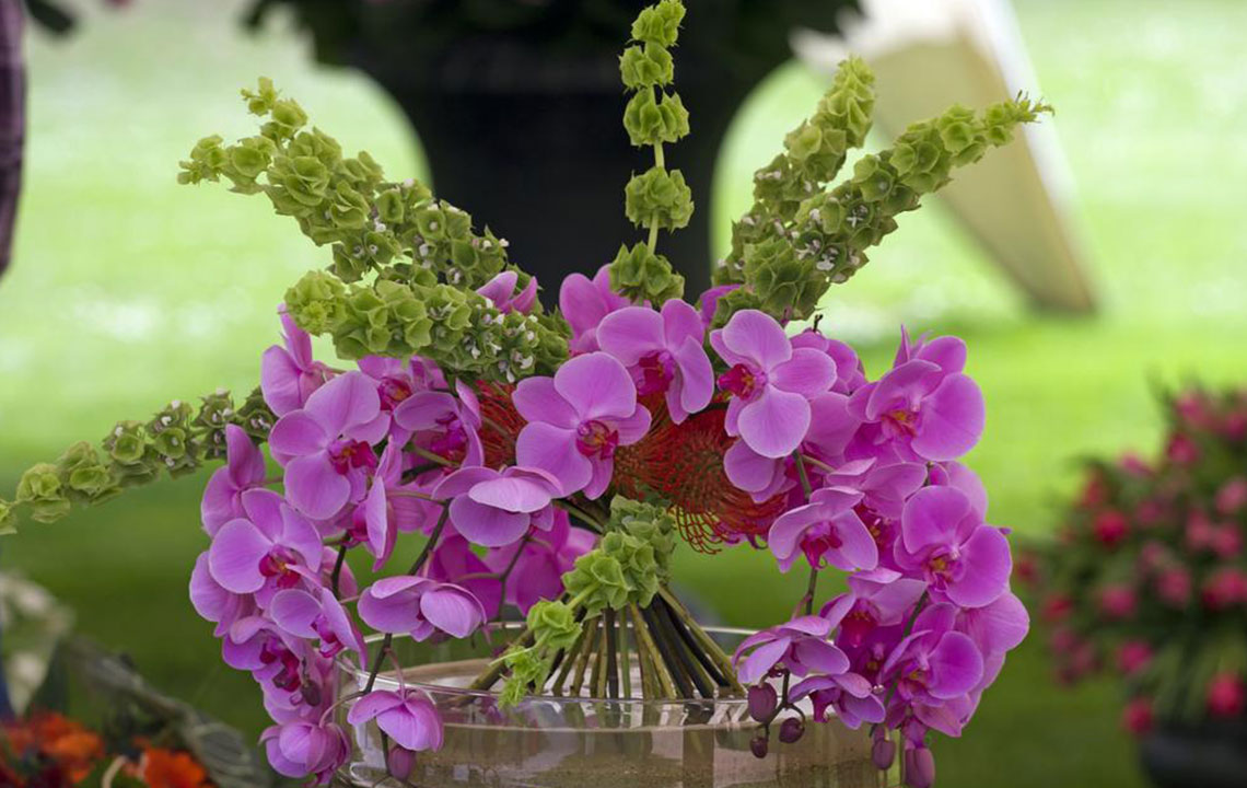 Tips to grow orchids indoors in water without soil