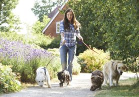7 Things to Look for in a Dog Walker