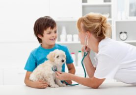 5-Ways-Pet-Insurance-Can-Be-a-Lifesaver