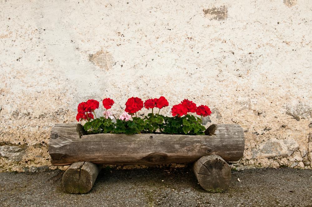 flowering garden ideas for small homes