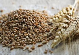 Why-You-Need-to-Add-Wheat-Berries-to-Your-Diet