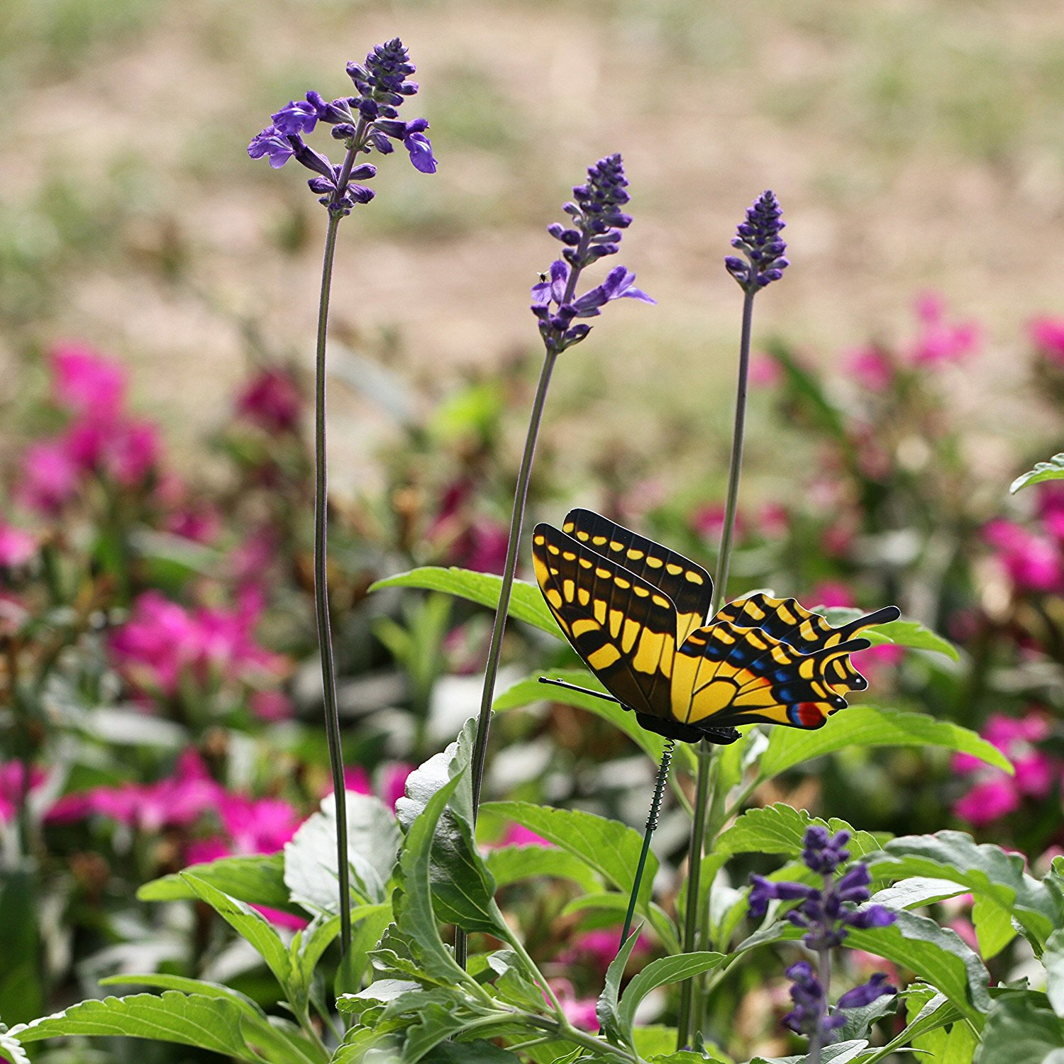 butterfly attracting flower beds in small houses