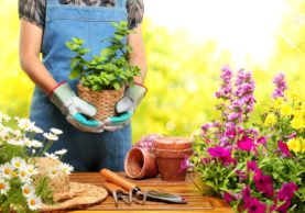 flower gardening tips for small house