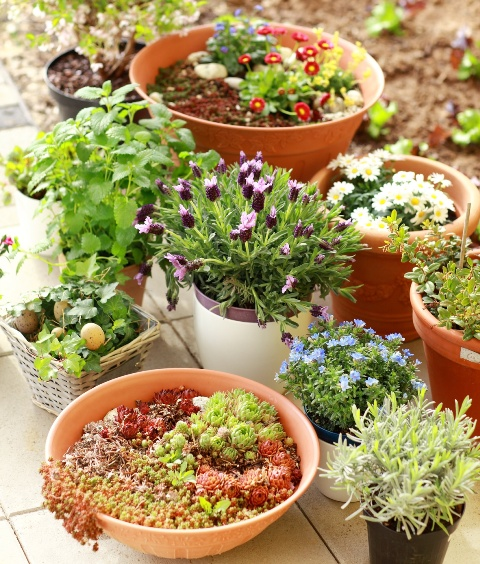 clay pots for flowering in small houses