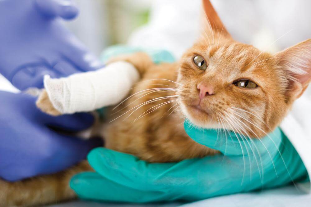 A Guide To Pet Insurance Coverage For Sterilization Services