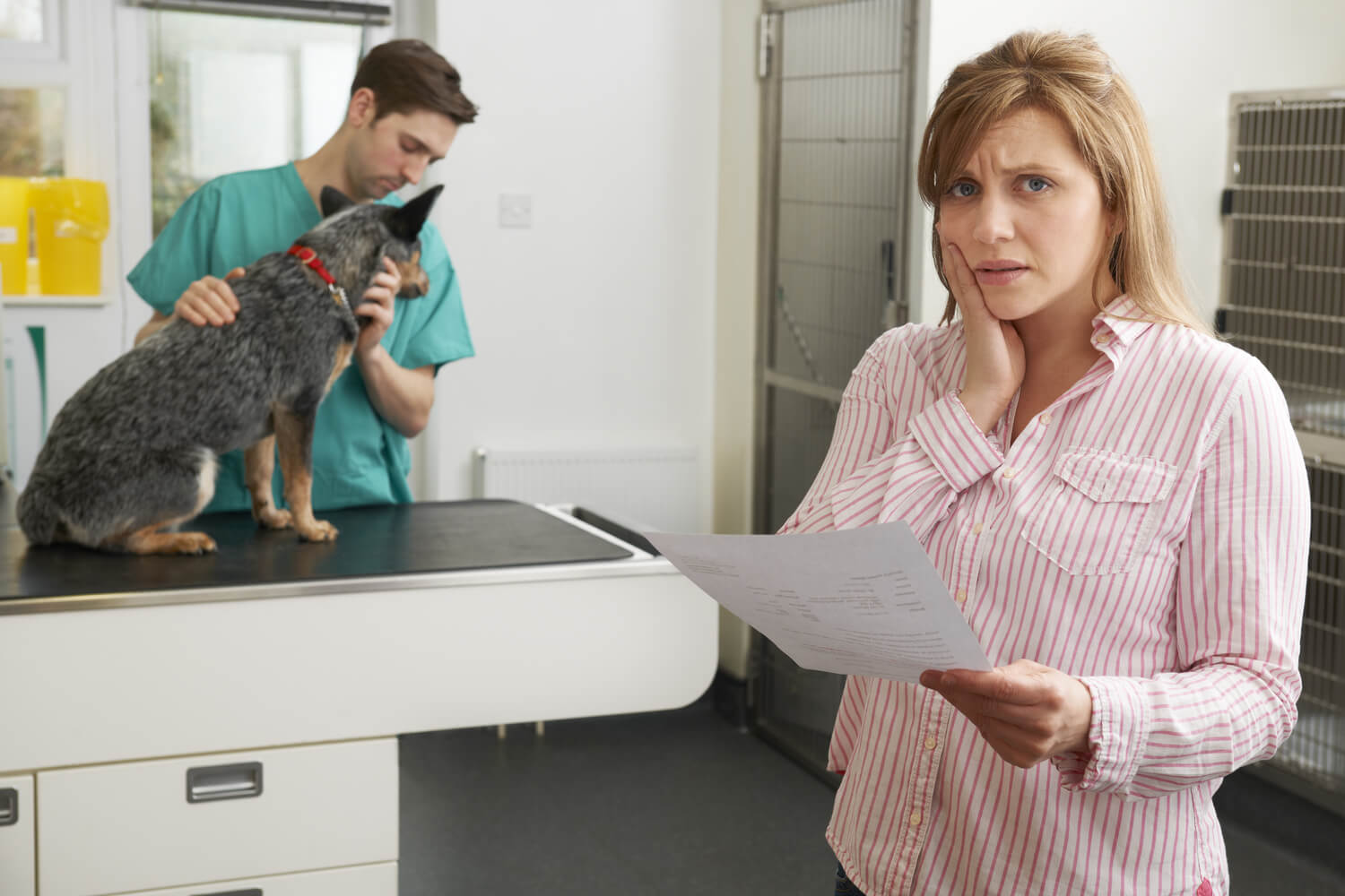 Pet Insurance Cover For Euthanasia