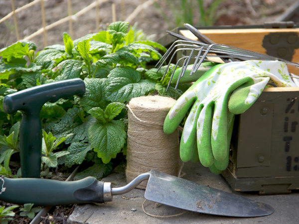 Create a beautiful garden with the right tools and accessories